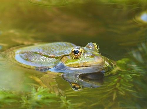 tutto per gli anfibi rane e tartarughe d'acqua dolce