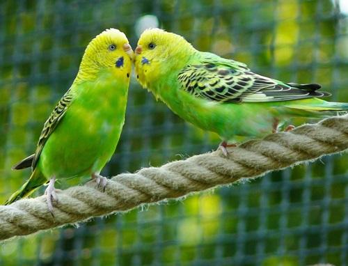 negozio vendita uccelli matera altamura