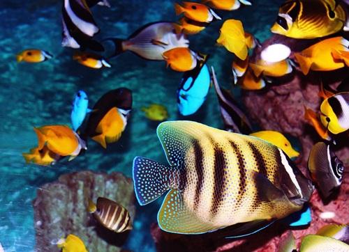 pesci marini per acquario