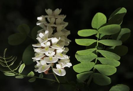 piante d'appartamento bellissime