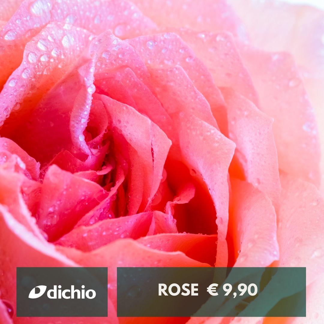 Rose (vari colori)